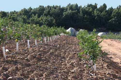 A Farm Management Company Specializing In Avocado And Lemon Groves And Orchards As Well As